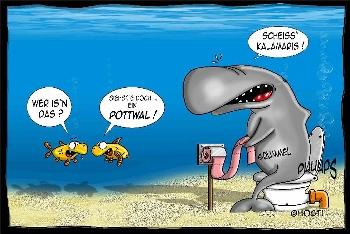 Postkarte Potwal