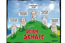 Postkarte Deichschafe