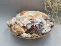 Muschelkorb 20cm