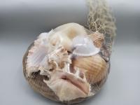 Muschelkorb groß ca. 28 cm