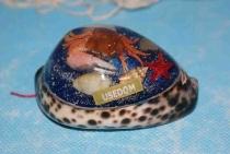 Tigermuschel mit Usedom ca. 7 cm