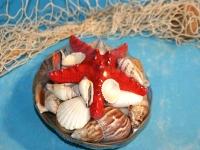Muschelkorb mit Noppenseestern ca.15cm